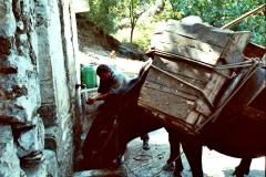 11-PferdMenschWasserBild0005-2